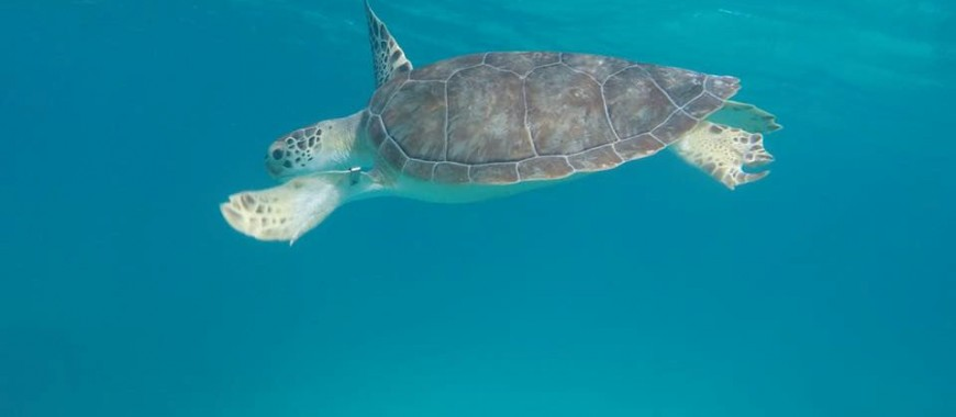 Turtle pic (002)